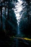 Nachtnebeliger Wald stockbilder