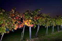 Nachtreis aan winegrowing in oogsttijd stock foto