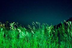 Nachtscène: de sterrige hemel boven het gebied, een lange blindsnelheid stock foto's