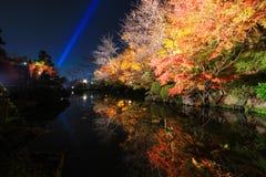 Nachtscène van kleurrijke bomen Royalty-vrije Stock Foto's