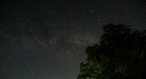Nachtsternenklarer Himmel über den Treetops Eine Ansicht des offenen Raumes Stockfotos