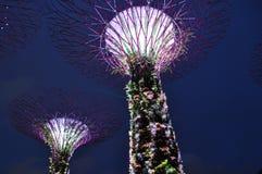 Nachtszene arbeitet durch die Bucht supertrees Singapur im Garten Stockfoto