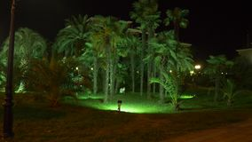 Nachttropischer Park mit Palmen im beliebten Erholungsort mit Nachtbeleuchtung 4K stock video