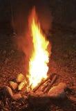 Nachtvuur in het hout Stock Fotografie