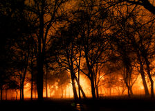 Nachtwald Stockfotos