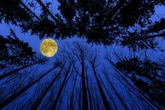 Nachtwald Stockbild