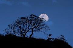 nachtzeit lizenzfreies stockfoto