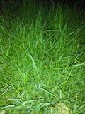 Nachtzeit-Gras Lizenzfreie Stockfotos
