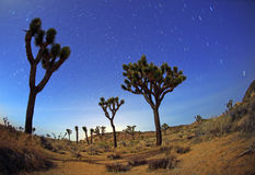 Nachtzeit-Stern-Spuren im Joshua-Baum-Park Stockbild