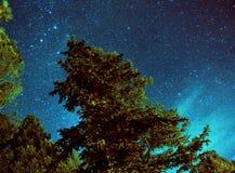 Nachtzeitbaum mit Milchstra?e stockfotos