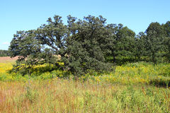 Nachusa草原在伊利诺伊 库存图片