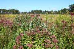 Nachusa Grasslands Flowers Illinois Stock Photos