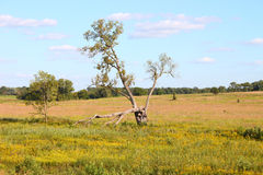 Nachusa Grasslands - Illinois Royalty Free Stock Photo