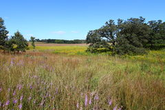 Nachusa Grasslands - Illinois Stock Photo