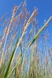 Nachusa Grasslands - Illinois Royalty Free Stock Images