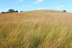Nachusa Grasslands Illinois Royalty Free Stock Photography