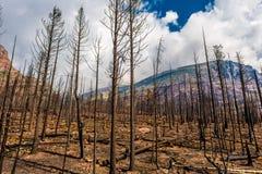 Nachwirkungs-Reynolds Creek Wildland Forest Fire-Glacier Nationalpark 2015 Stockbild