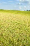 Nachylająca łąka Fotografia Stock