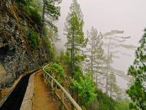 Nacientes Marcos y Cordero Trail, La Palma Stock Image