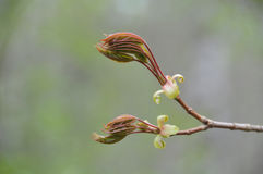 Nacimiento de flores Imagen de archivo libre de regalías