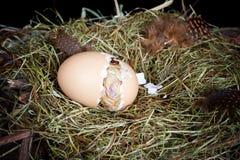 Nacimiento de un pollo Foto de archivo