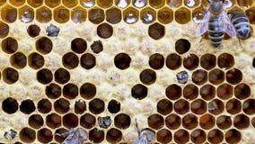 Nacimiento de una nueva abeja metrajes