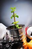 Nacimiento de una planta de una poder en la basura Foto de archivo libre de regalías