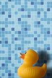 Nacimiento del pato de goma Foto de archivo