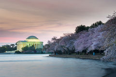 Nacional Cherry Blossom Festival de Thomas Jefferson Monument Washington DC Imagen de archivo