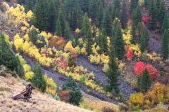 Nacional Forest Fall Scenery do esconderijo foto de stock royalty free