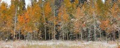 Nacional Forest Scenery do esconderijo imagem de stock