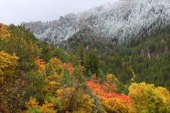 Nacional Forest Utah do esconderijo imagens de stock
