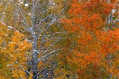 Nacional Forest Utah do esconderijo foto de stock royalty free