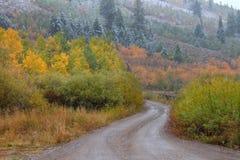 Nacional Forest Utah do esconderijo fotos de stock