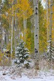 Nacional Forest Utah do rio do esconderijo foto de stock