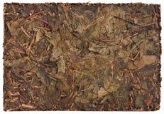 Naciskający herbaciany liścia tło Obraz Royalty Free