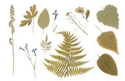 Naciskający Wysuszony herbarium Różnorodne rośliny zdjęcie stock