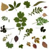 Naciskający Wysuszony herbarium Różnorodne rośliny odizolowywać na Białym tle Obrazy Stock