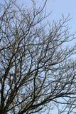 Nackte Niederlassungen über blauem Himmel Stockfoto