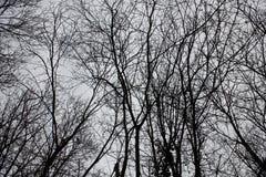 Nackte Niederlassungen eines Baums gegen Abschluss des blauen Himmels oben Stockfotografie