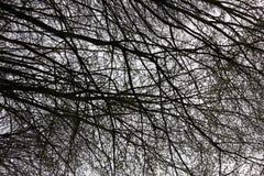 Nackte Niederlassungen eines Baums gegen Abschluss des blauen Himmels oben Stockfotos