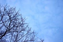 Nackte Niederlassungen eines Baums gegen Abschluss des blauen Himmels oben Bäume lizenzfreie stockfotos