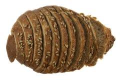 Naco de pão cortado foto de stock royalty free