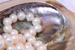Nacre and white pearls. Round white pearls in a beautiful mother of pearl shell Royalty Free Stock Image