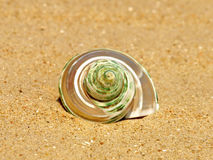 Nacreous conch shell on sandy beach. Royalty Free Stock Image