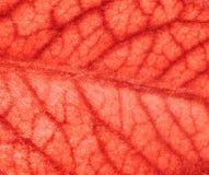 Naczynia krwionośne Obraz Stock