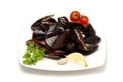 naczynia mussel Obrazy Stock