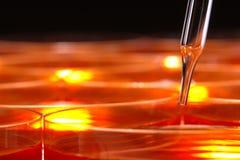 naczynia Petri laboratorium badania nauki laboratoryjnej Zdjęcia Royalty Free