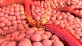 Naczynie krwionośne Fotografia Stock