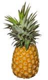 nad ananasowym biel Zdjęcie Royalty Free